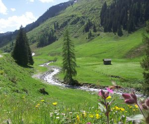 Alpbach Wildlife and Flowers