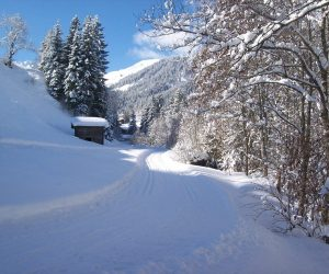 The Start of Cross Country Area (1 Minutes Walk from Haus Hislop